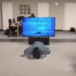 ARKit: la bambina di The Ring esce dalla TV e ti segue