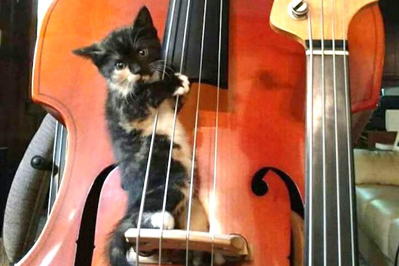 Musica per gatti