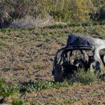"""Malta, delitto Daphne Caruana: """"Identificati i mandanti"""""""