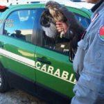 Palermo: deteneva illegalmente due poiane, denunciato
