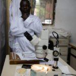 Pronto il primo atlante cellulare della malaria