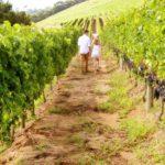 Fase 2: Città del vino, enoturismo volano rinascita territori
